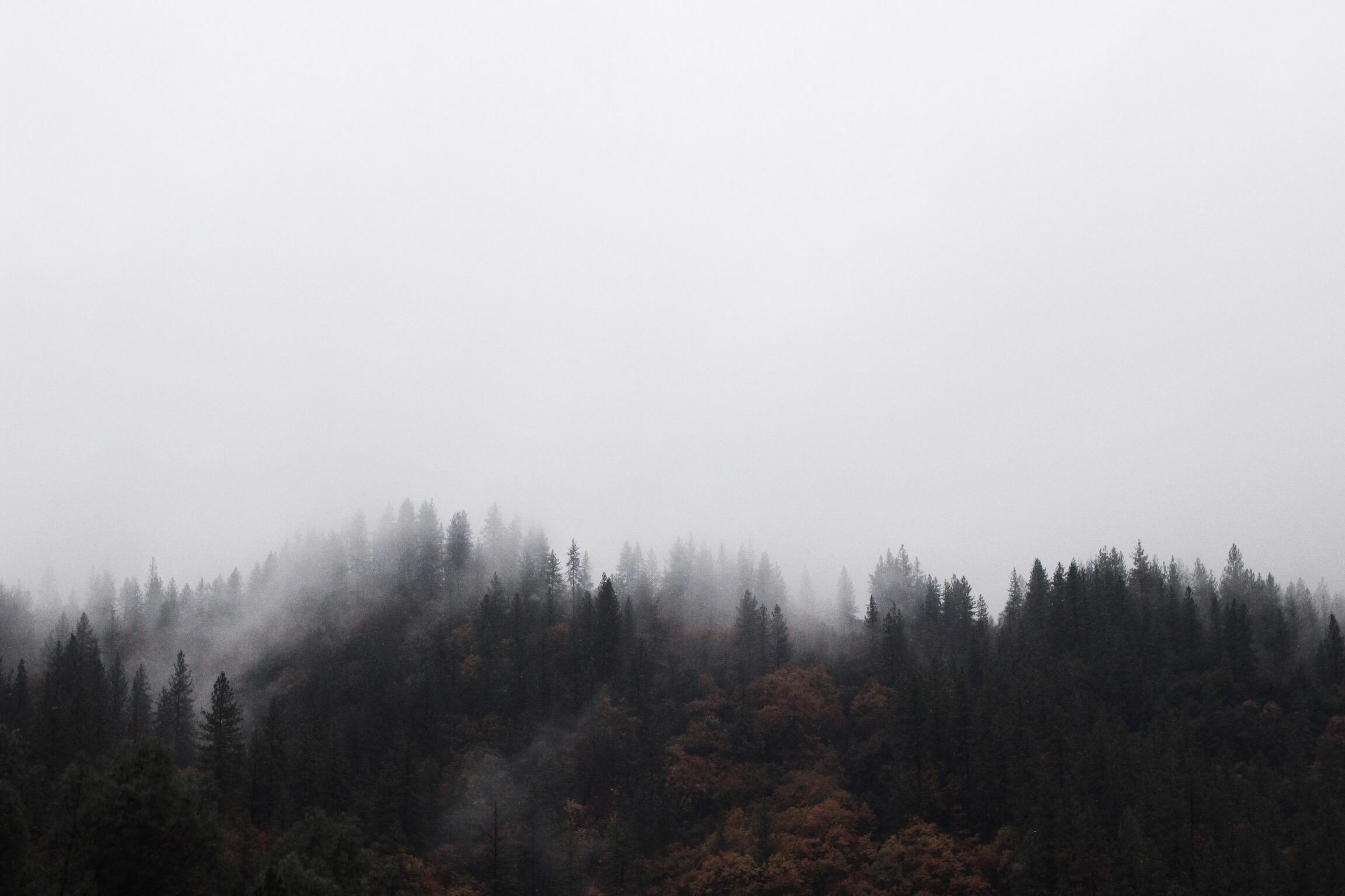 Fog Cover // Mel Denisse