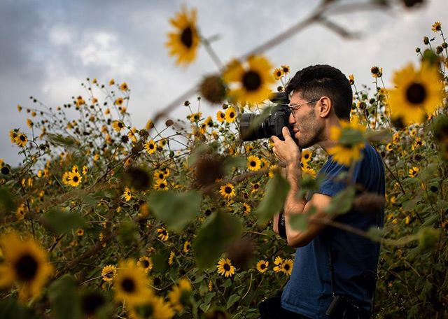 Tamir, taking photos among the sunflowers at @jbgorganic early this morning