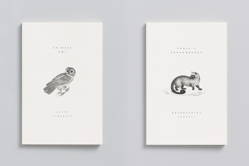 Reliefs_animaux_adrienne_bornstein_04.jpg