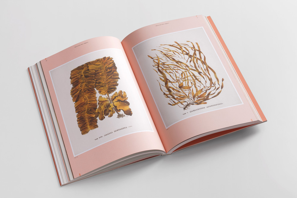 adrienne-bornstein-algues-museum-histoire-naturelle-delachaux-niestle_19.jpg