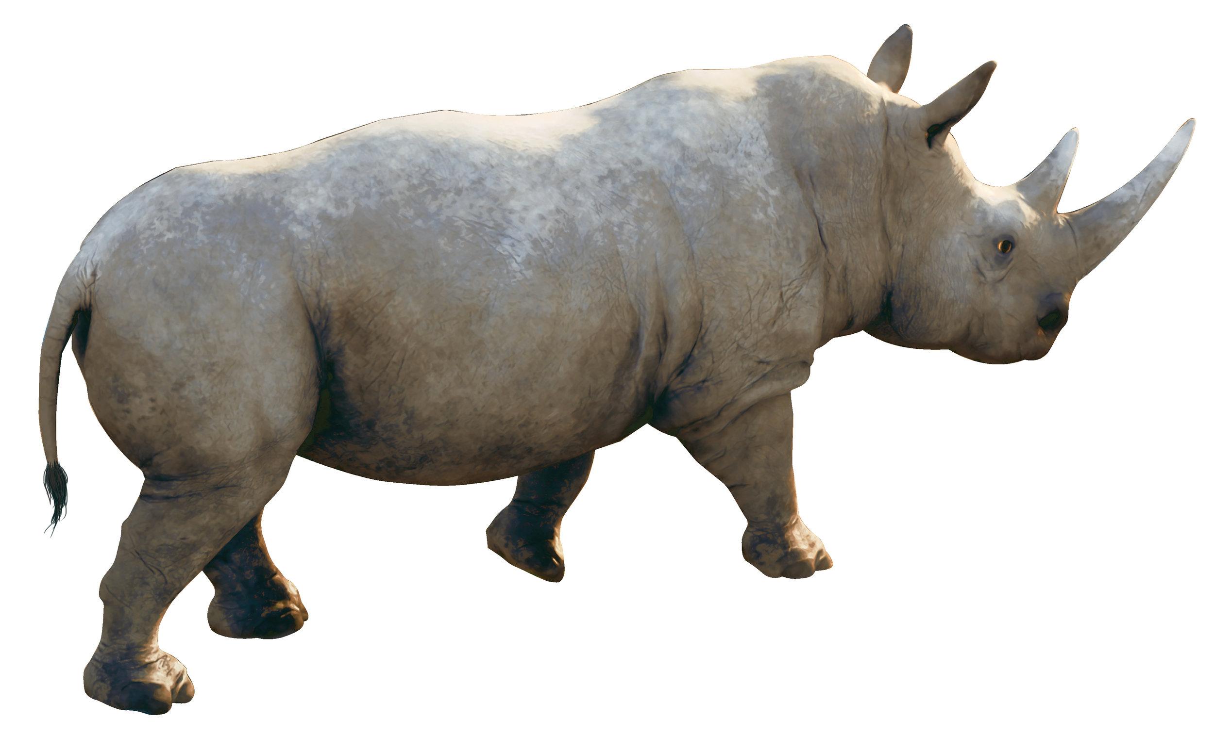 Rhinooceros.jpg