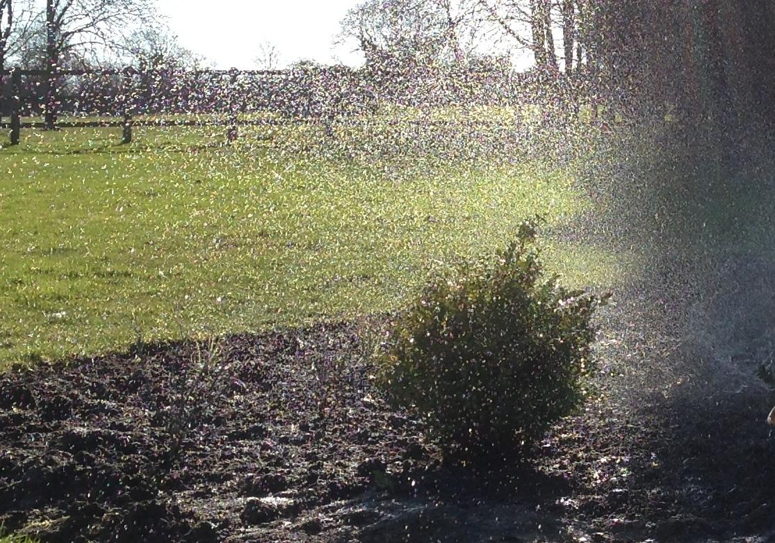 3. Spray cropped more.jpg