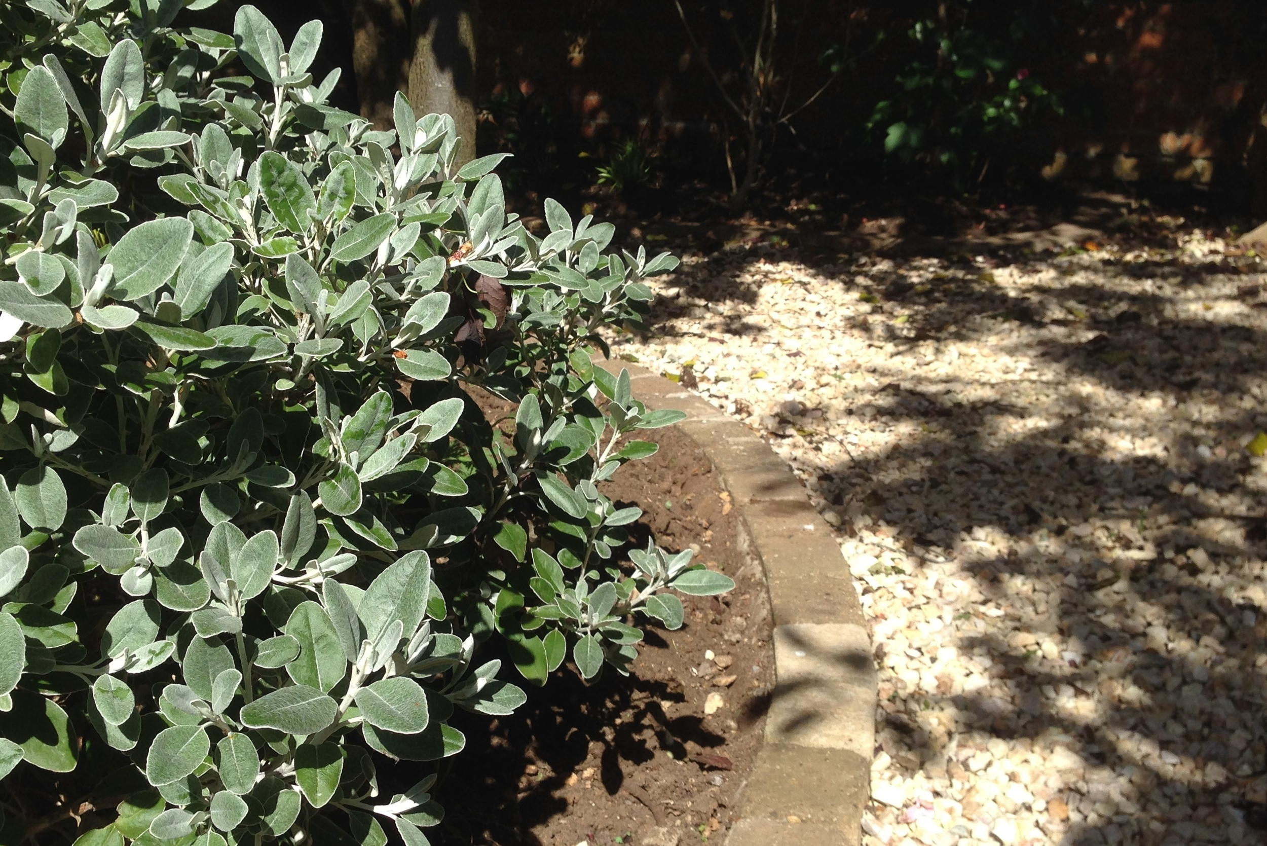 A Gravel path and shrubbery.JPG
