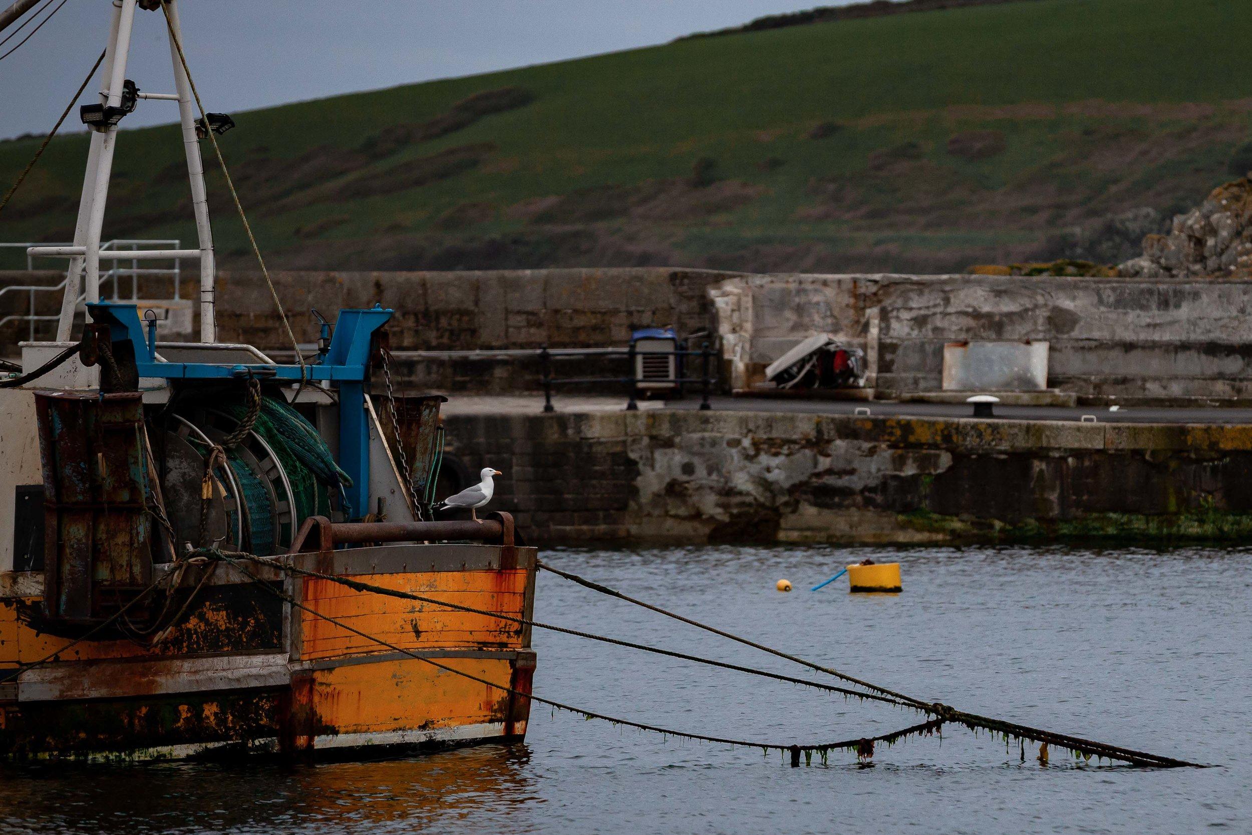 Boat-Builder-Mevagissey-SS-53.jpg