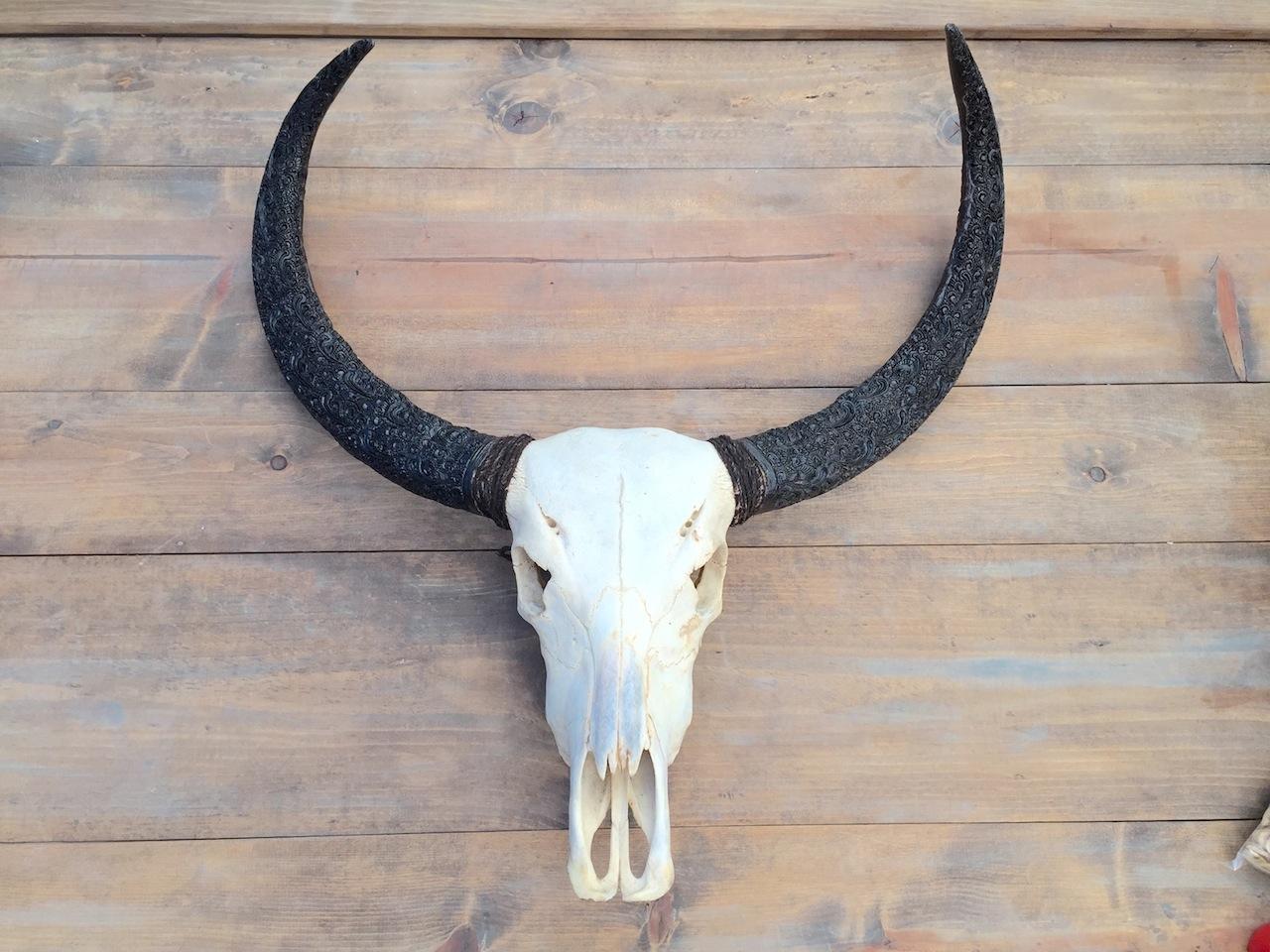 Plain Skull w Carved Horns