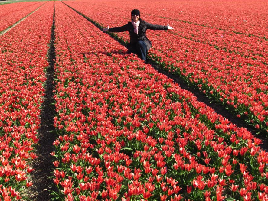 Flower Fields, Leiden