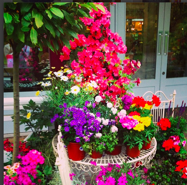 Flowers at Avoca Kilmacanogue