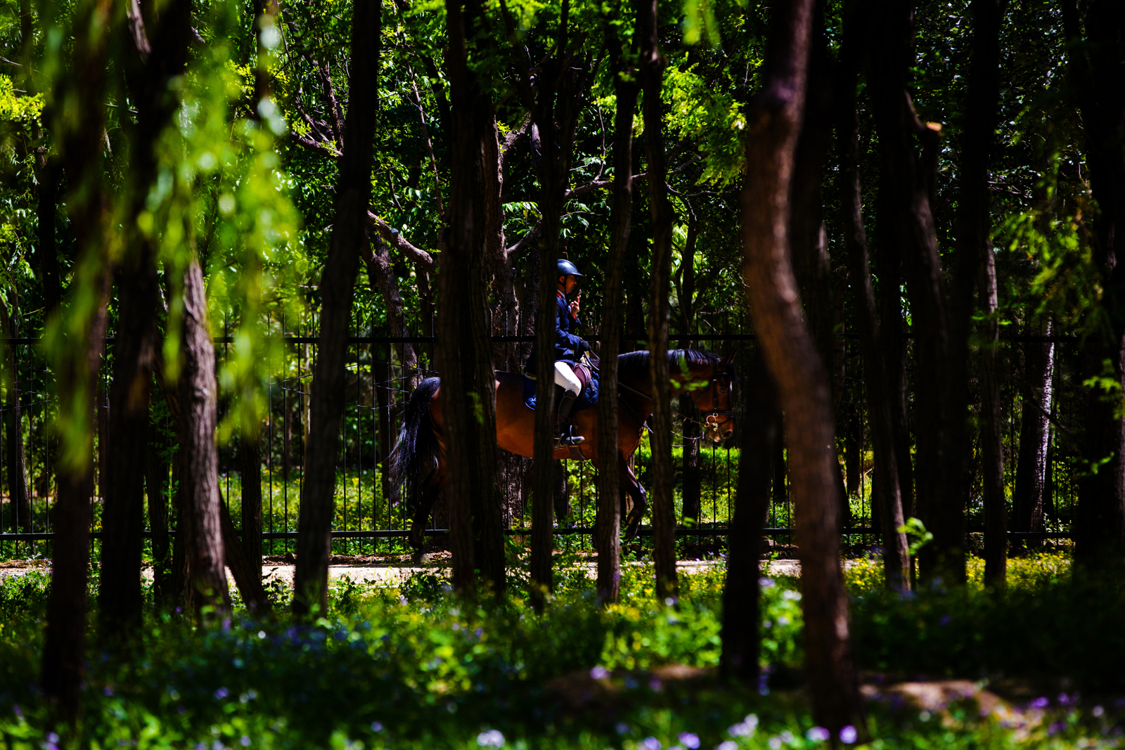 A rider and his a horse during the Longines FEI World Cup Jumping - China League at Chaoyang Park on May 3, 2016 in Beijing, China. (FEI/Yong Teck Lim)