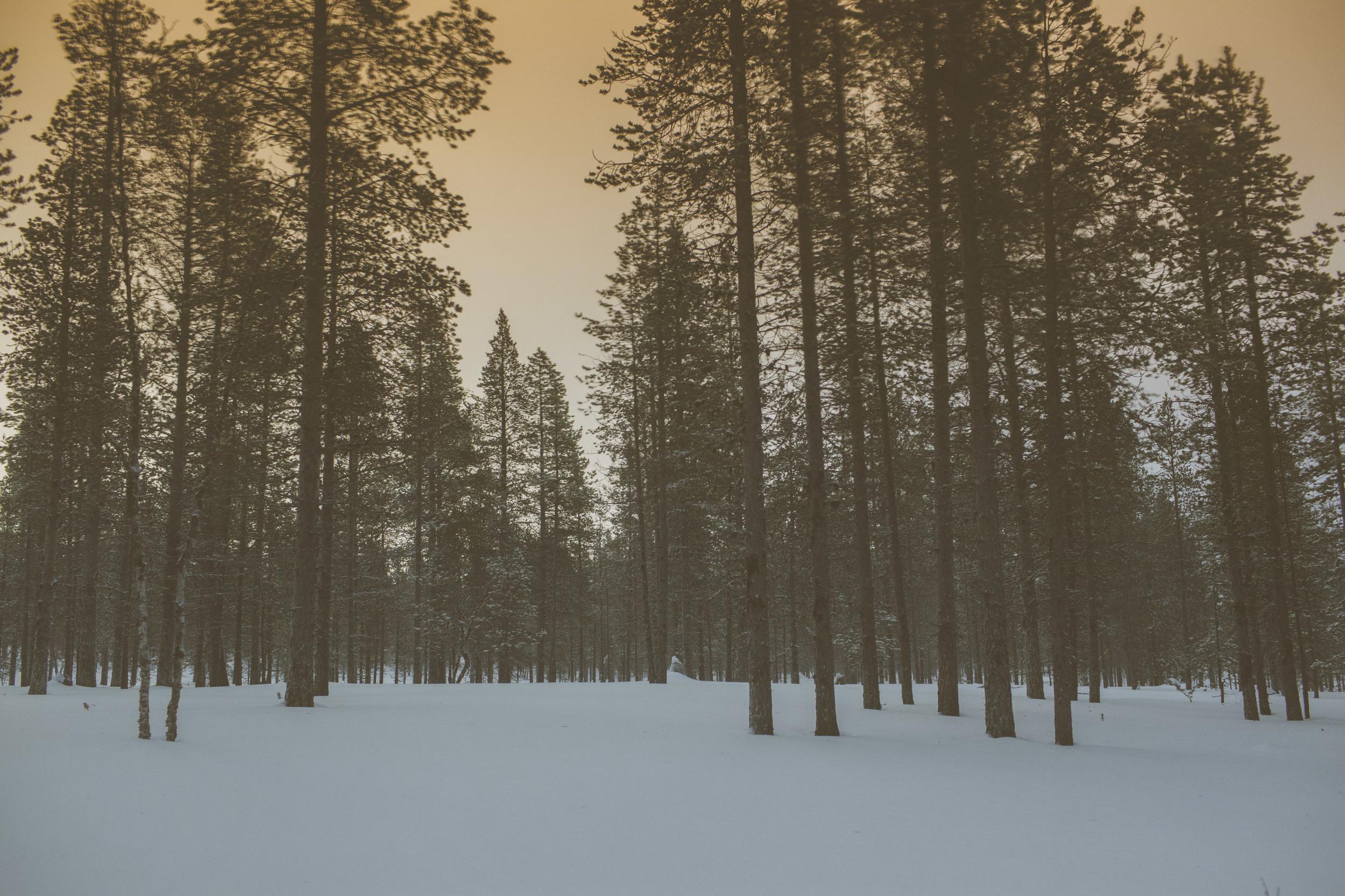 Arctic Woodland