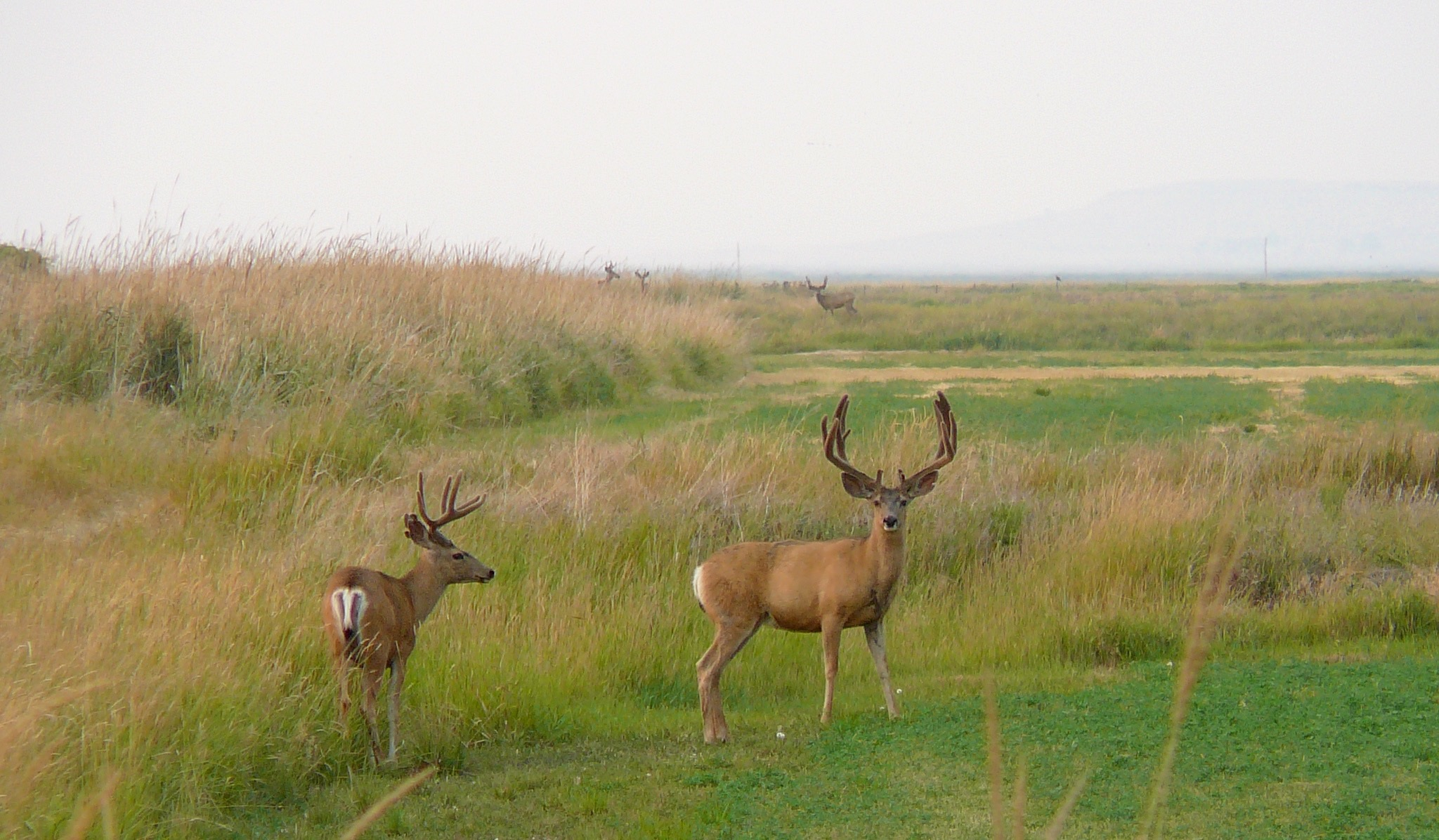 Hunting on the ranch -