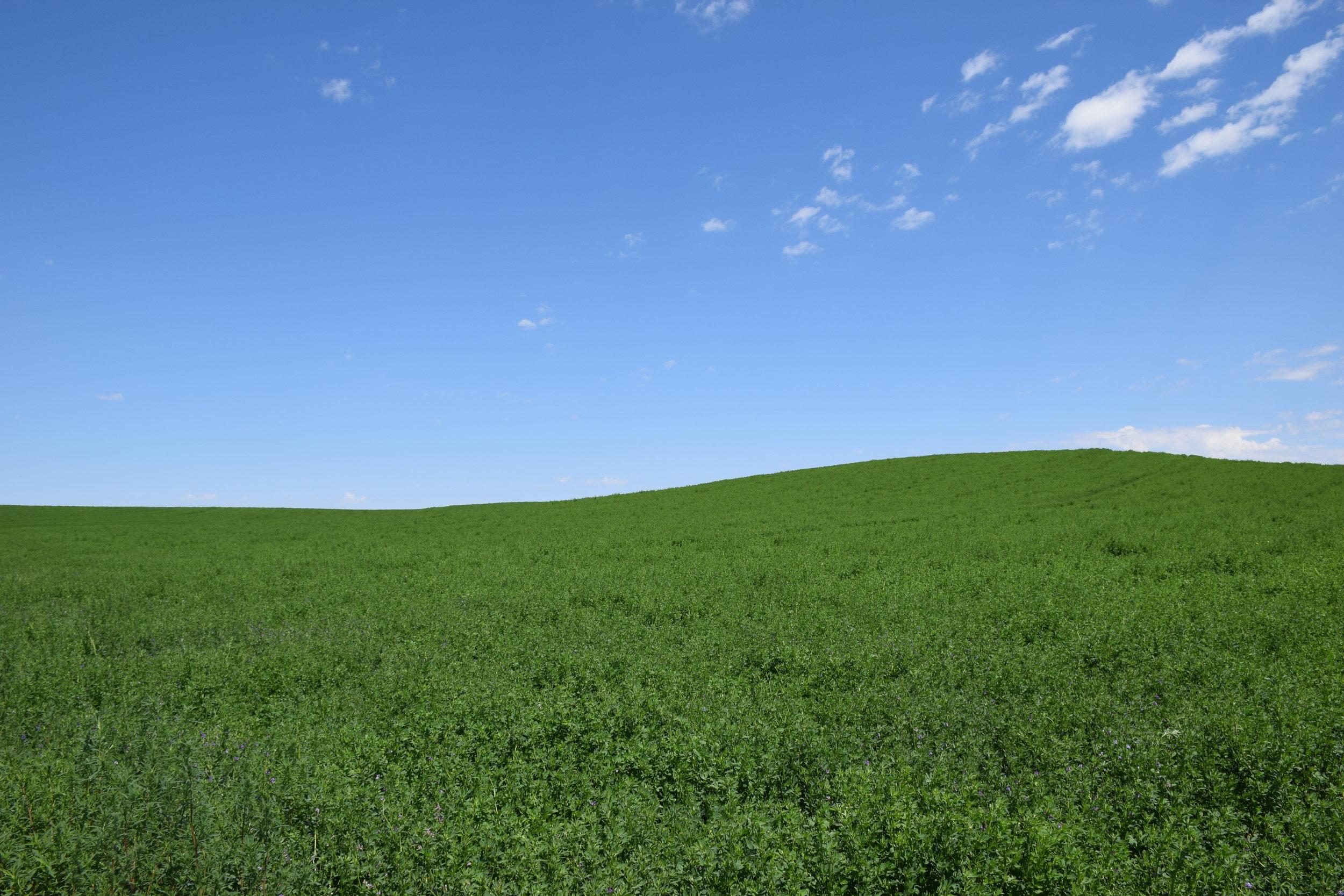 Alfalfa & Feed Products -