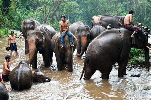Elephant farm  in Chiang Mai