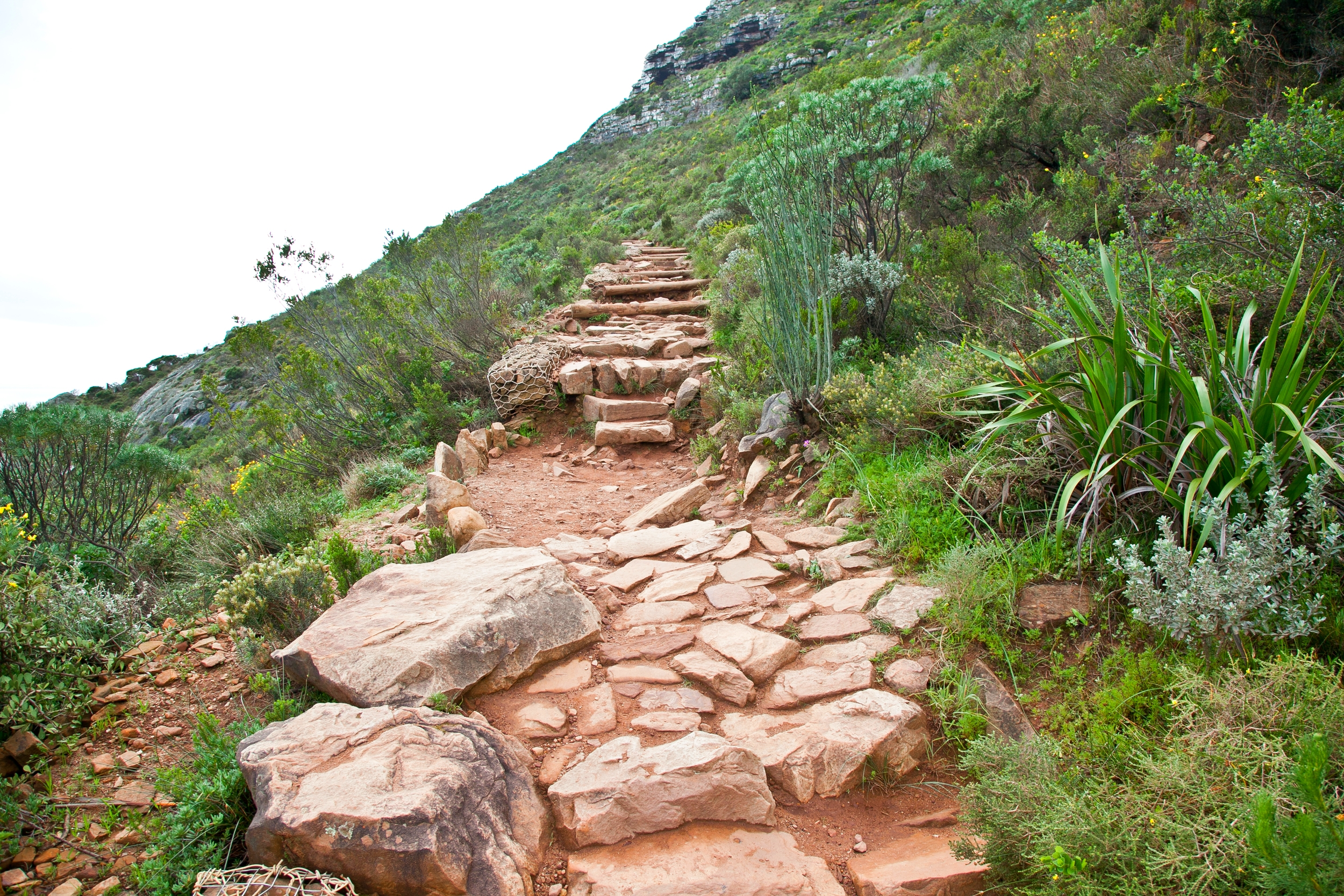 IMG_5020-hiking-lions-head-cape-town-trisa-taro.jpg