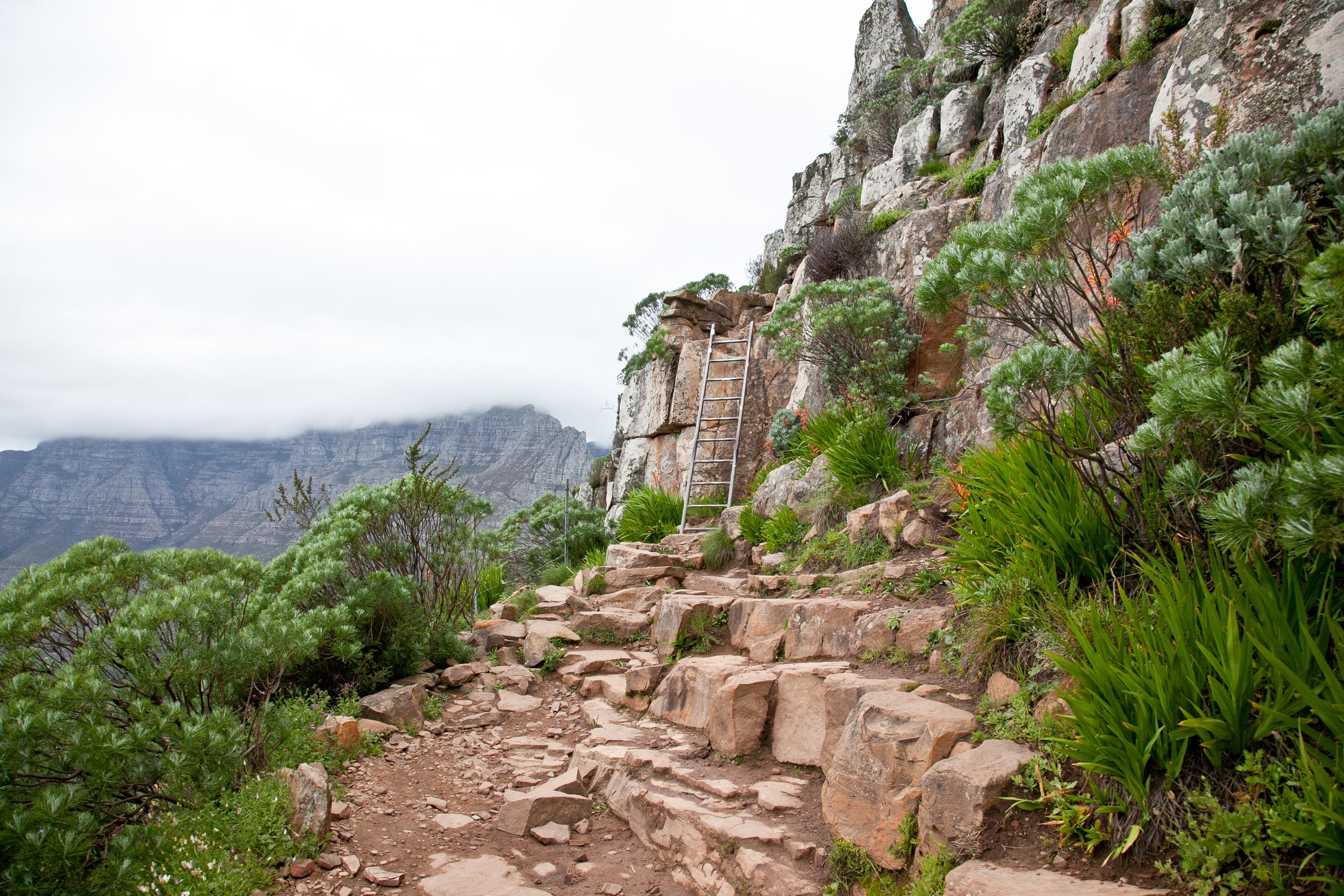 IMG_5041-hiking-lions-head-cape-town-trisa-taro.jpg