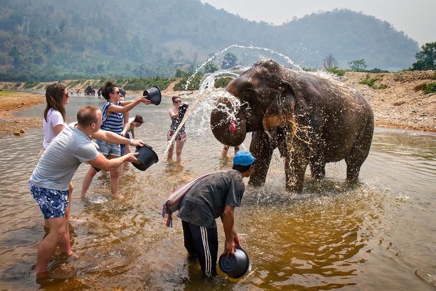 Elephant baths at Elephant Nature Park