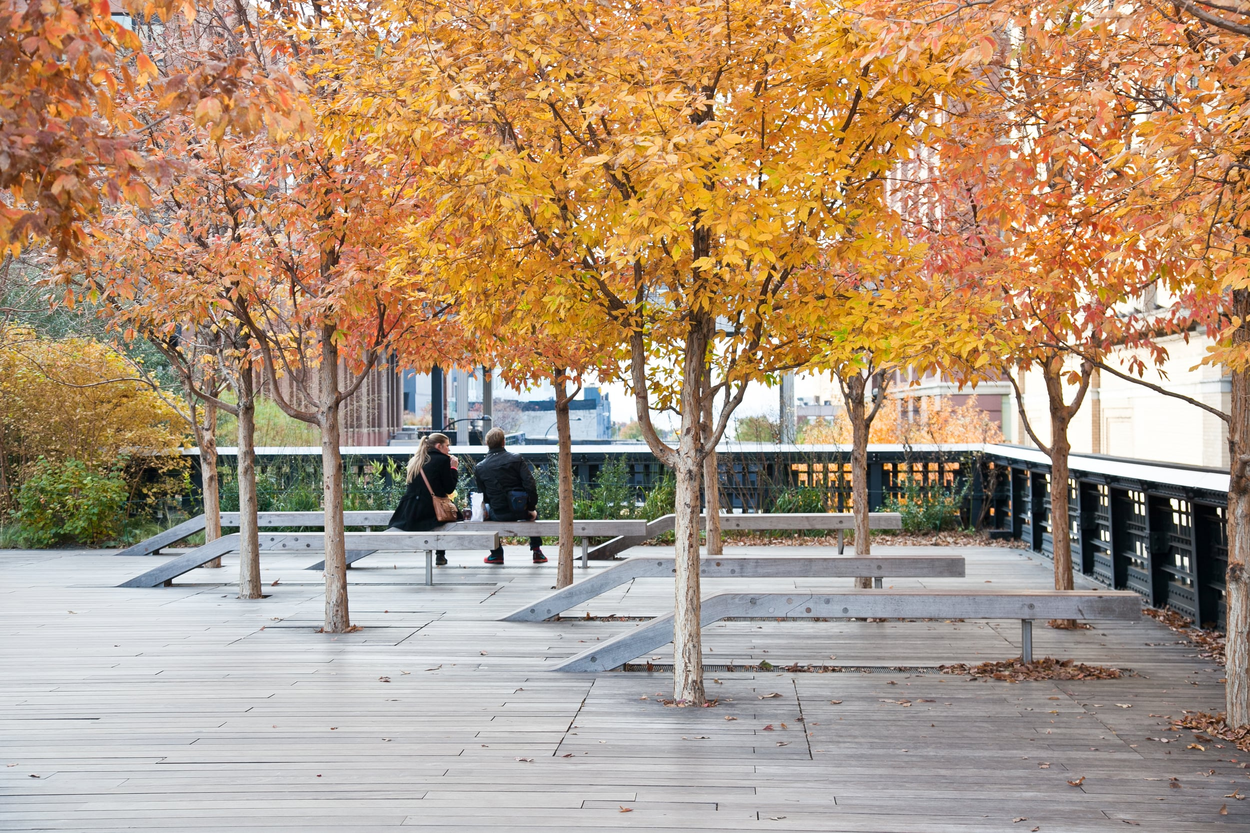 trisa-taro-high line-fall-trees-new york city.jpg