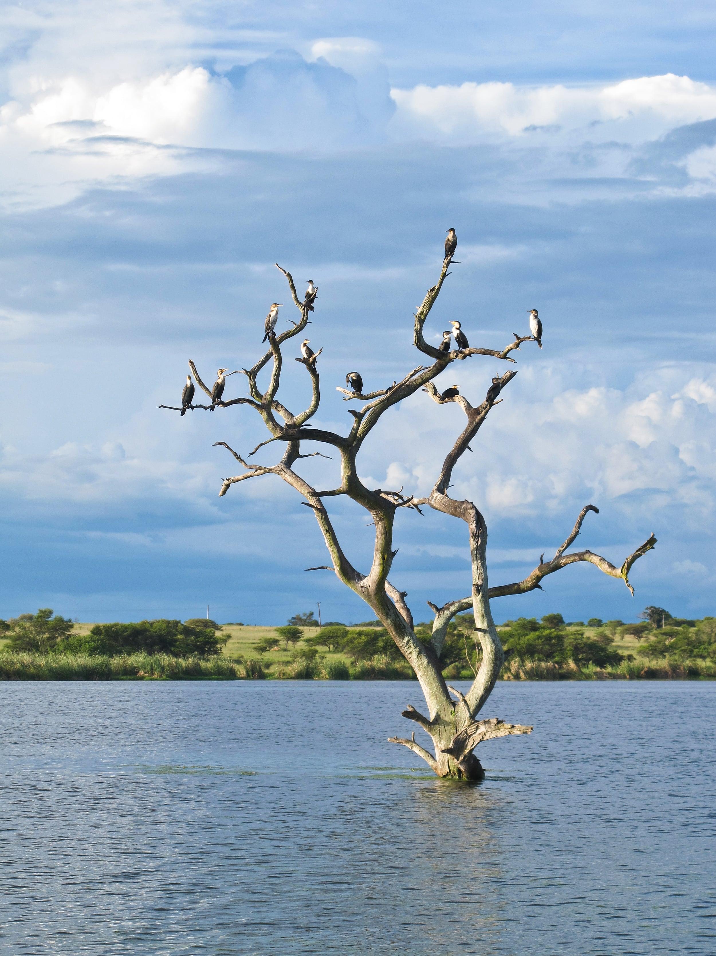 trisa-taro-lake-zimbabwe.jpg