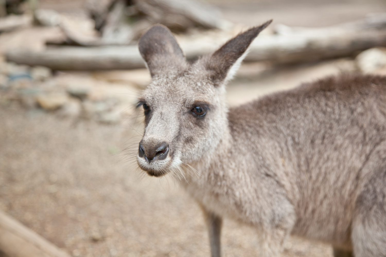 IMG_7736-featherdale-wildlife-park-wallaby-sydney-australia-trisa-taro.jpg