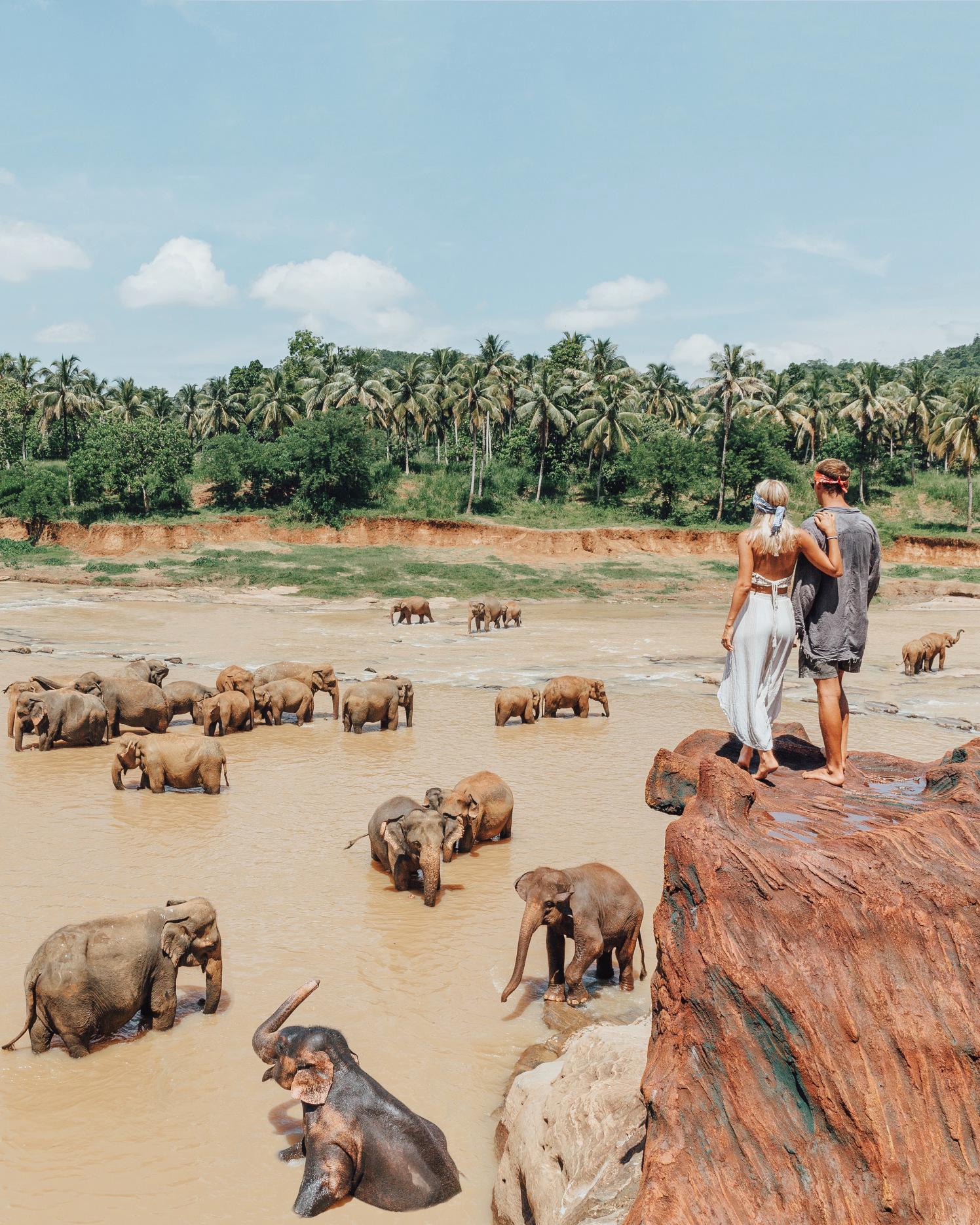 Elephant sanctuary  via  Gypsea Lust