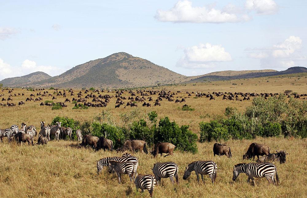 Masai Mara Reserve  via  Safari Bookings