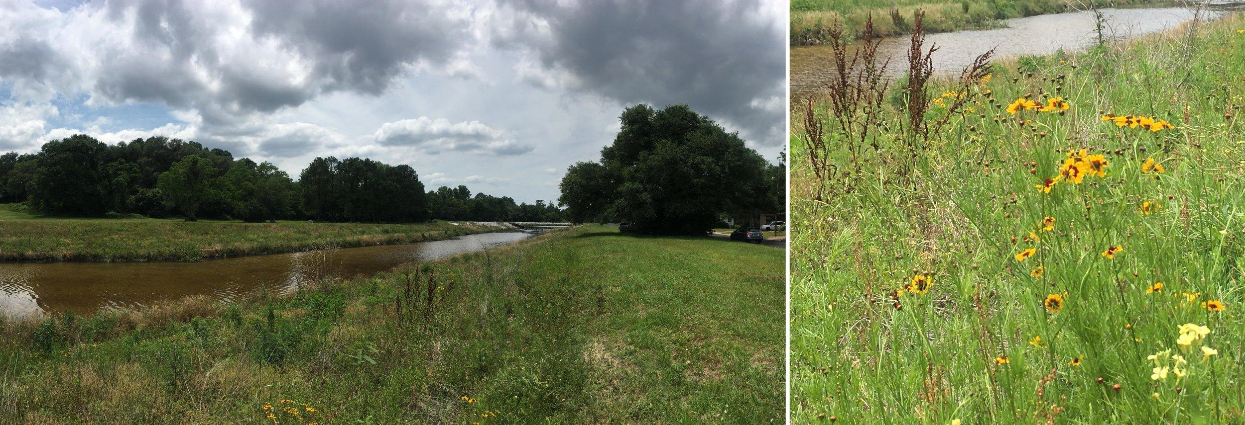 Park+Creek+Ecology.jpg