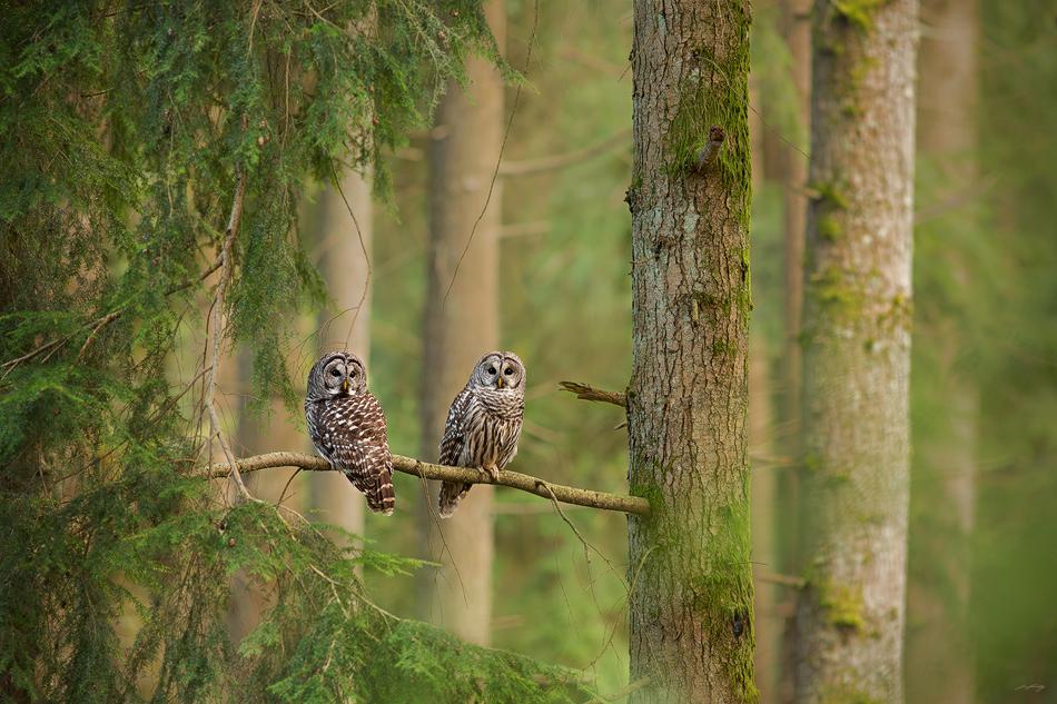ForestKeepers_website.jpg