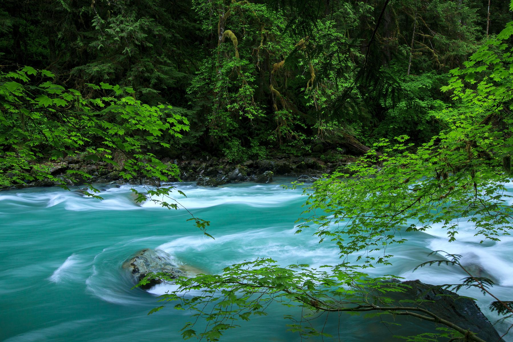 Glacial melt water flows through the rainforest in Washington's Mount Baker wilderness.  Image ©Connor Stefanison