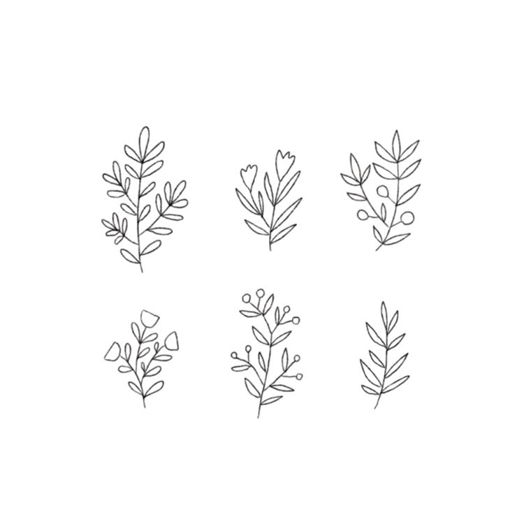 Minna+May+Design+Drawing+Plants-1.png