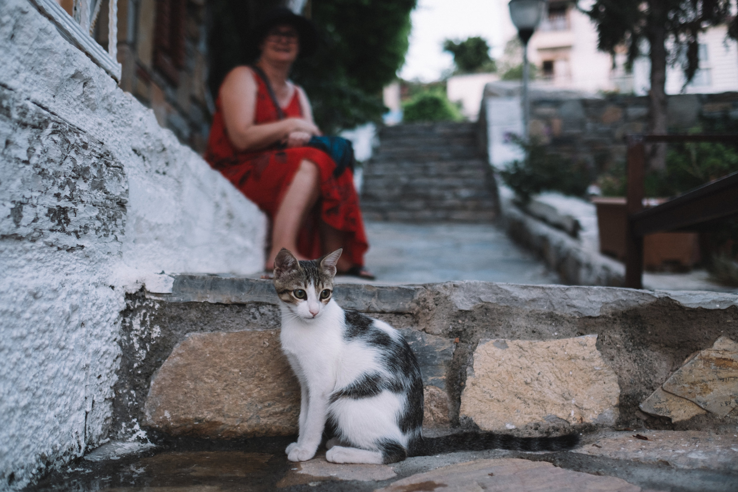 A woman is looking at a stray cat in Bodrum Turkey