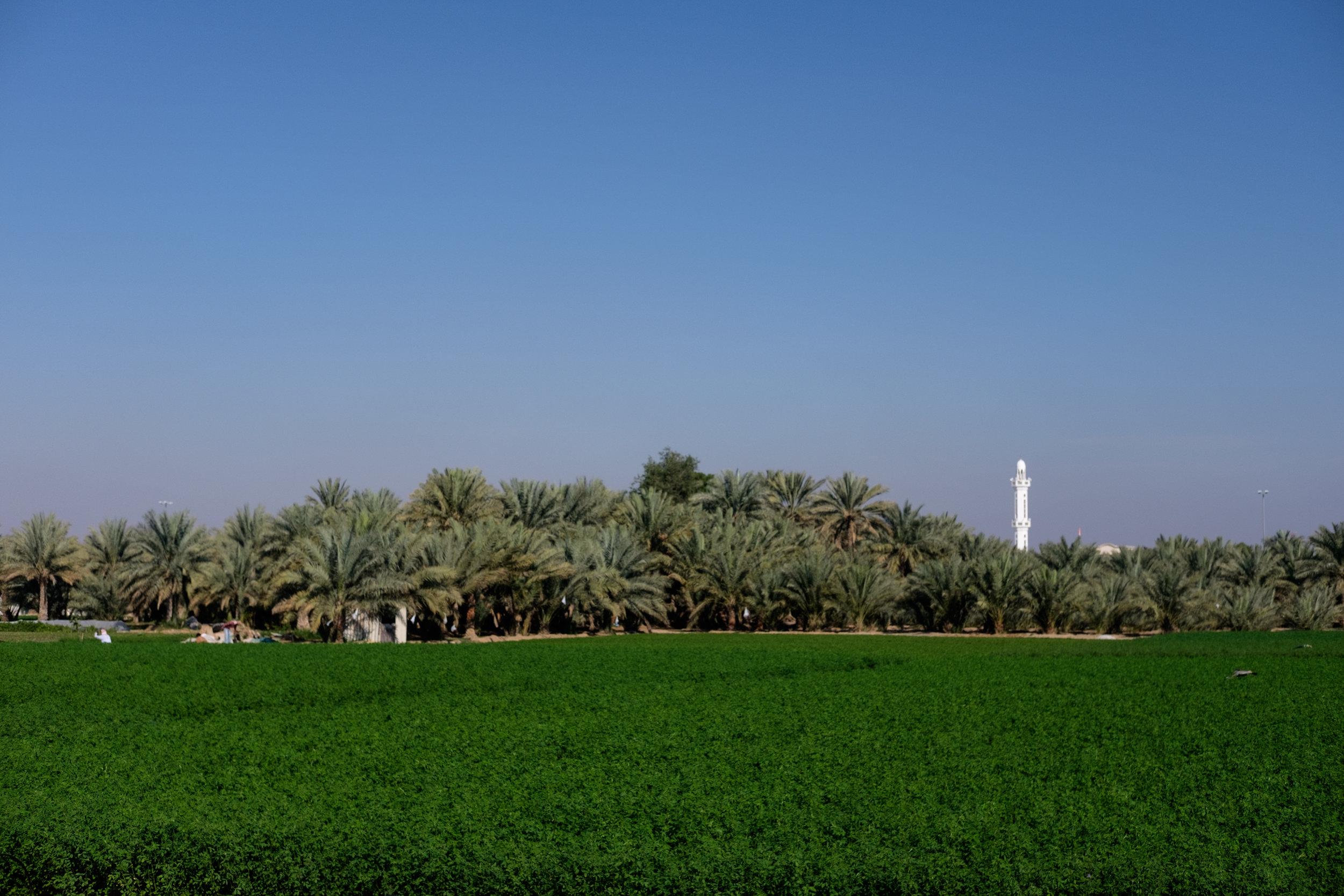 al-ain-outskirts-6092.jpg