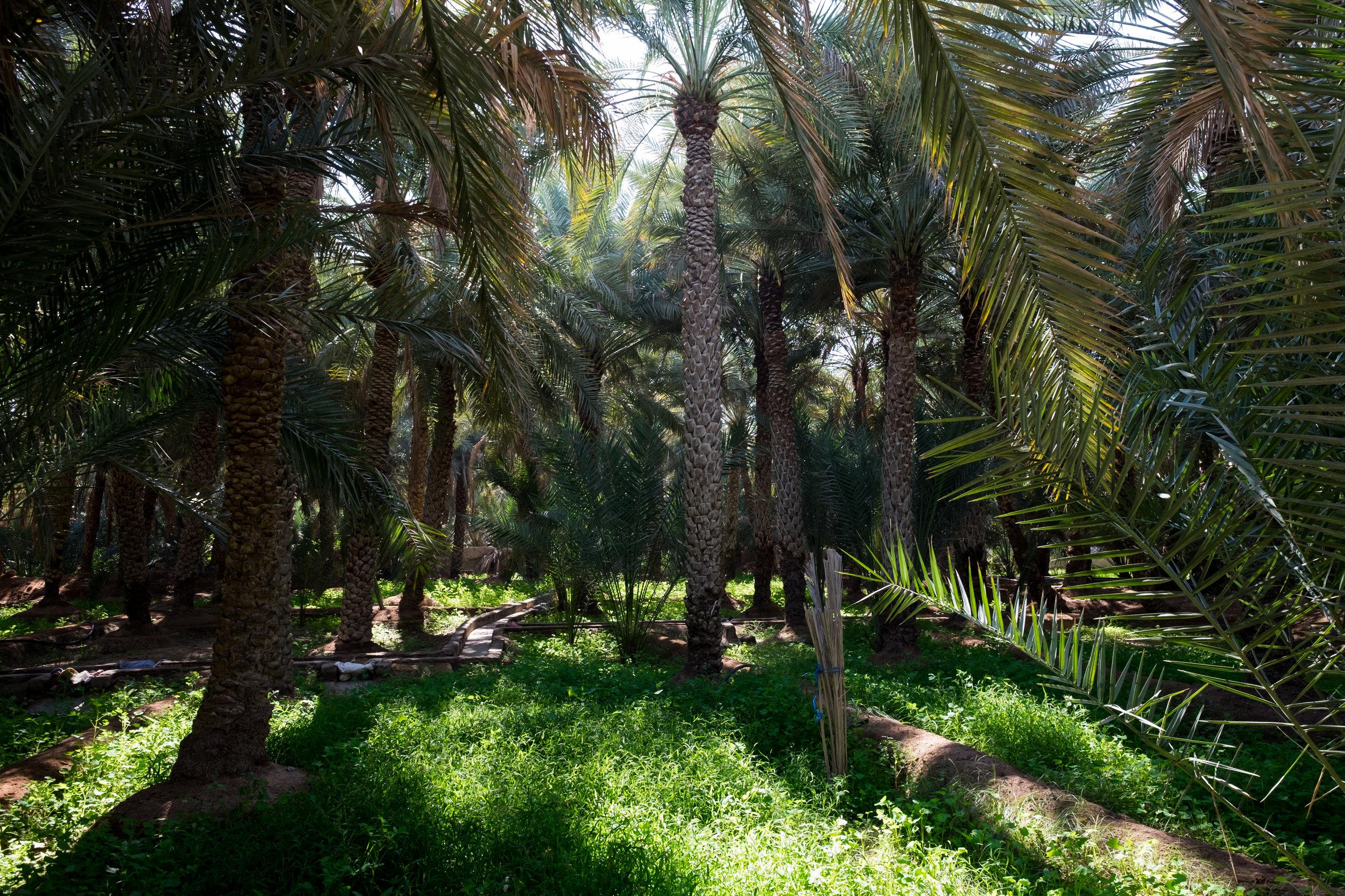 al-ain-outskirts-6118.jpg