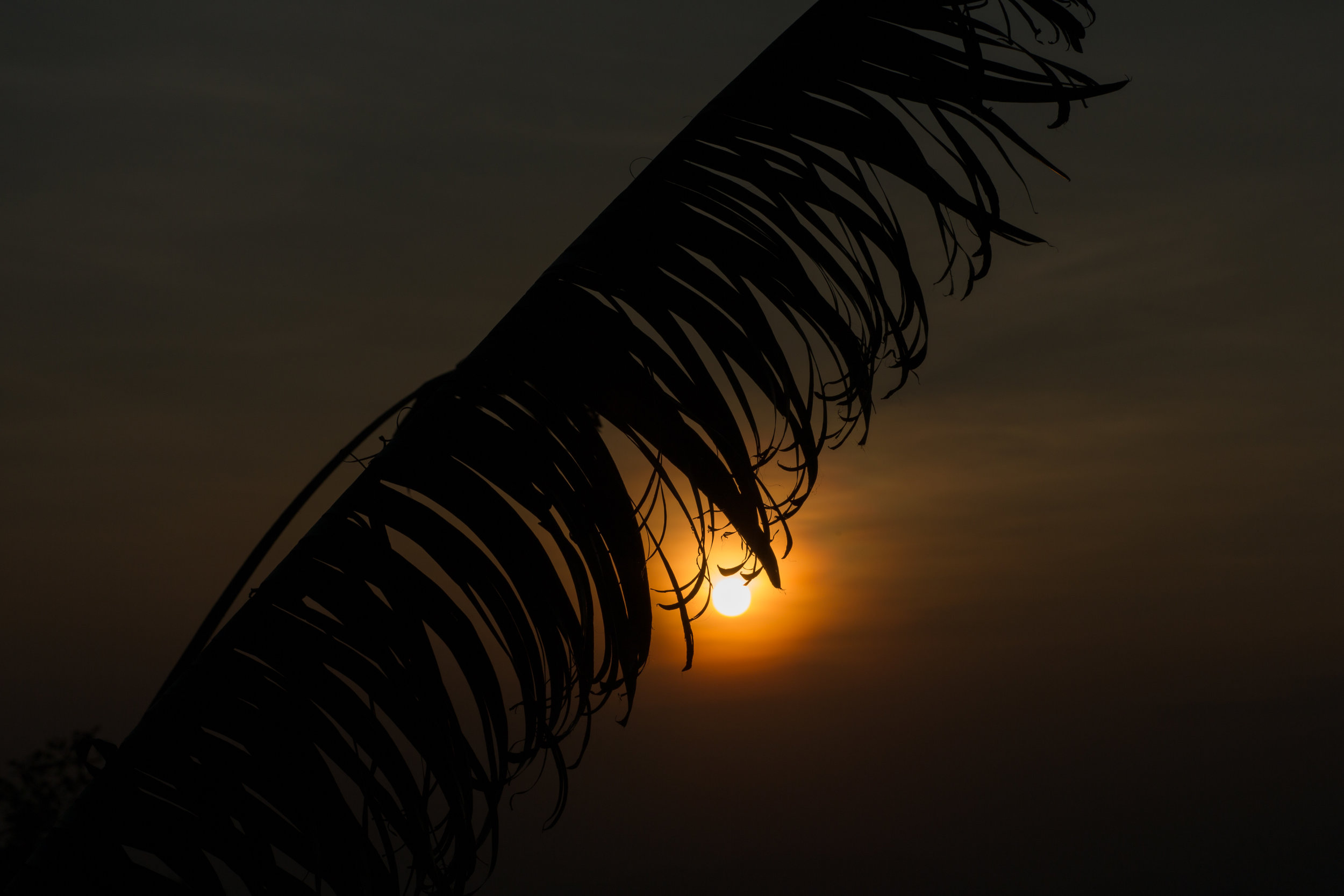 The sun sets in Hong kong by a palm tree branch