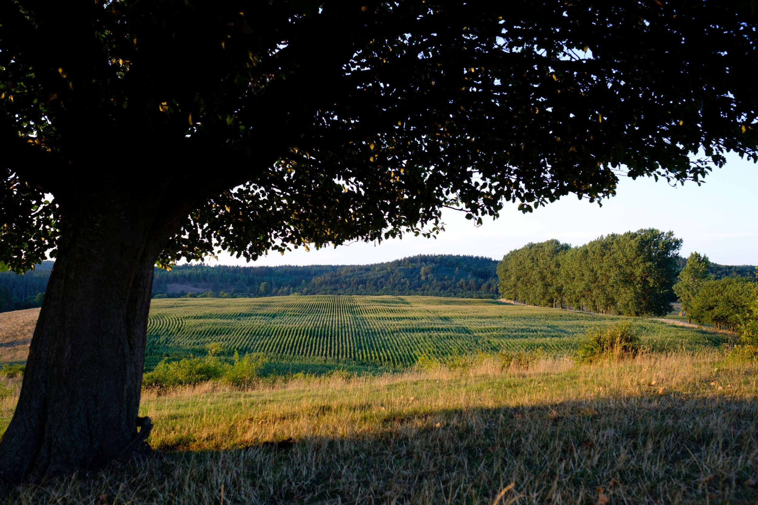 The view of a field from the hills of Brosarp in Skåne Sweden