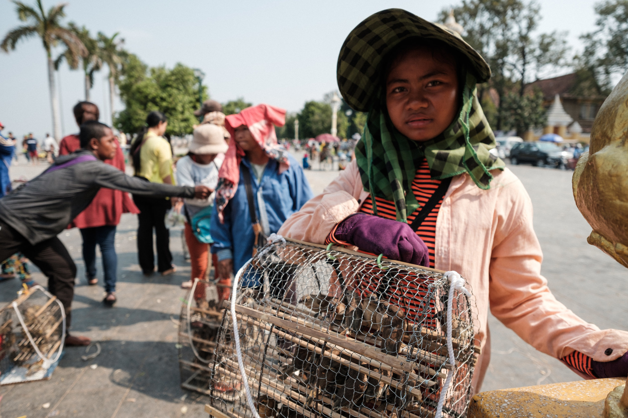Birds in cages are for sale as offerings to buddha during a ceremony in Phnom Penh Cambodia