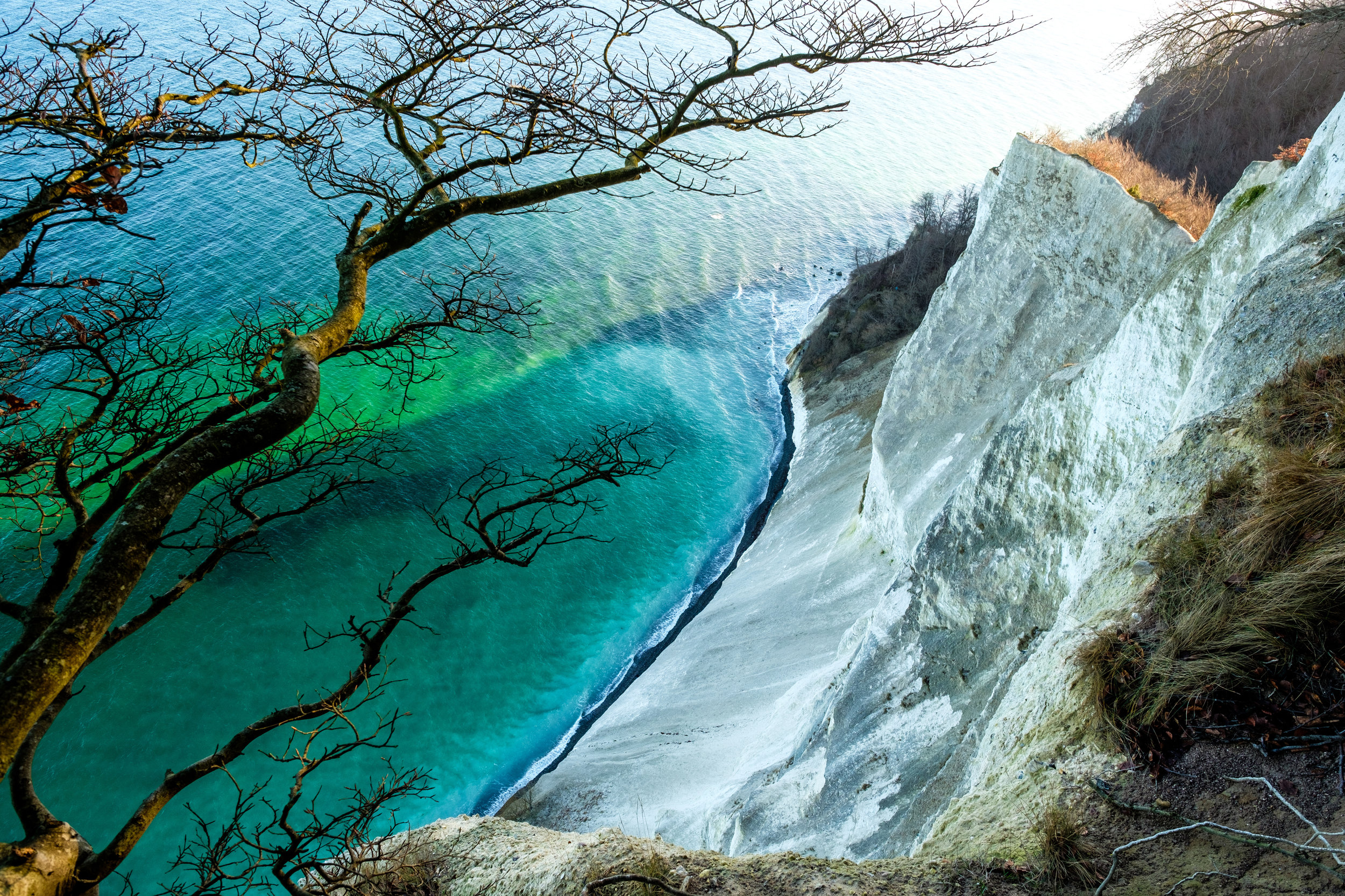 The trees and steep Cliffs of Moen, Møns Klint, and the green Baltic Sea below in Denmark