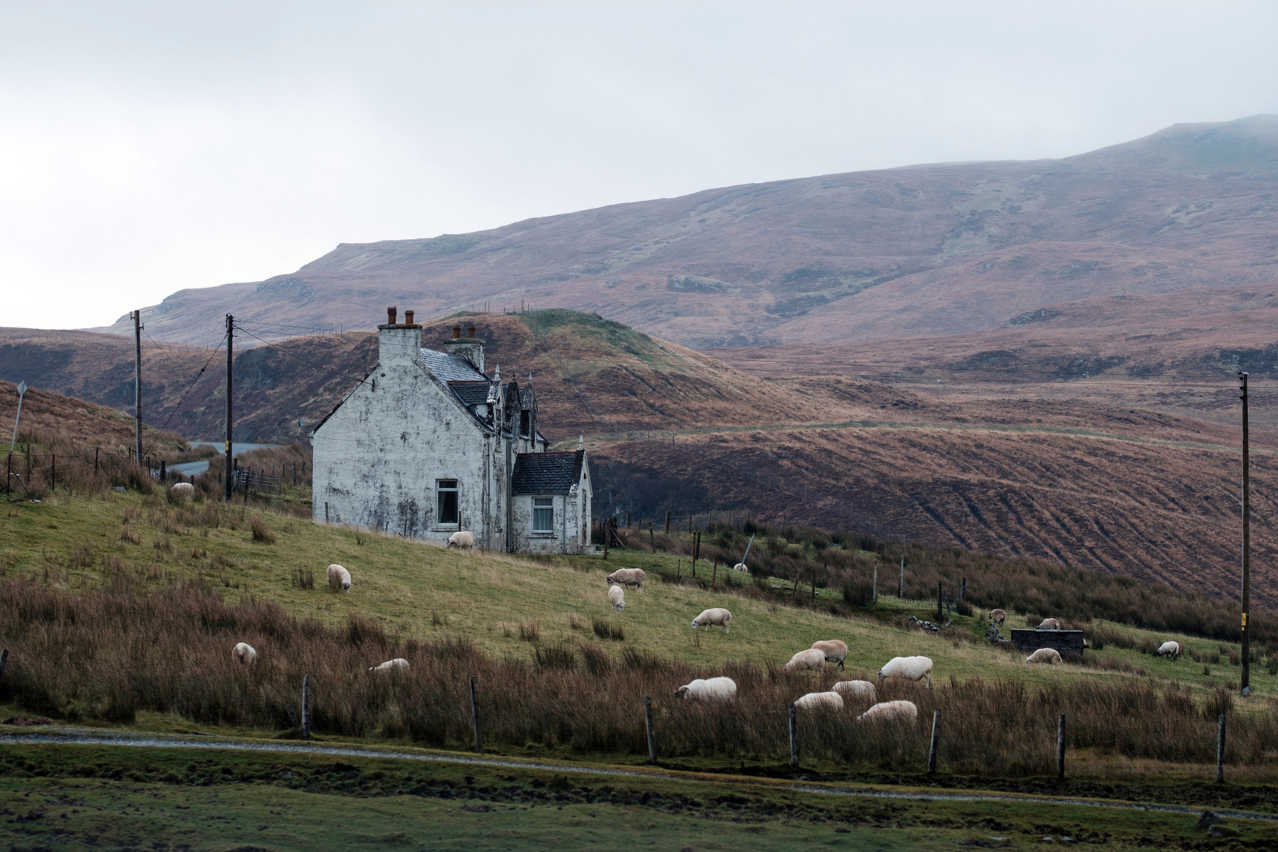 A home near Dunvegan with sheep grazing in the fields on Isle of Skye in Scotland