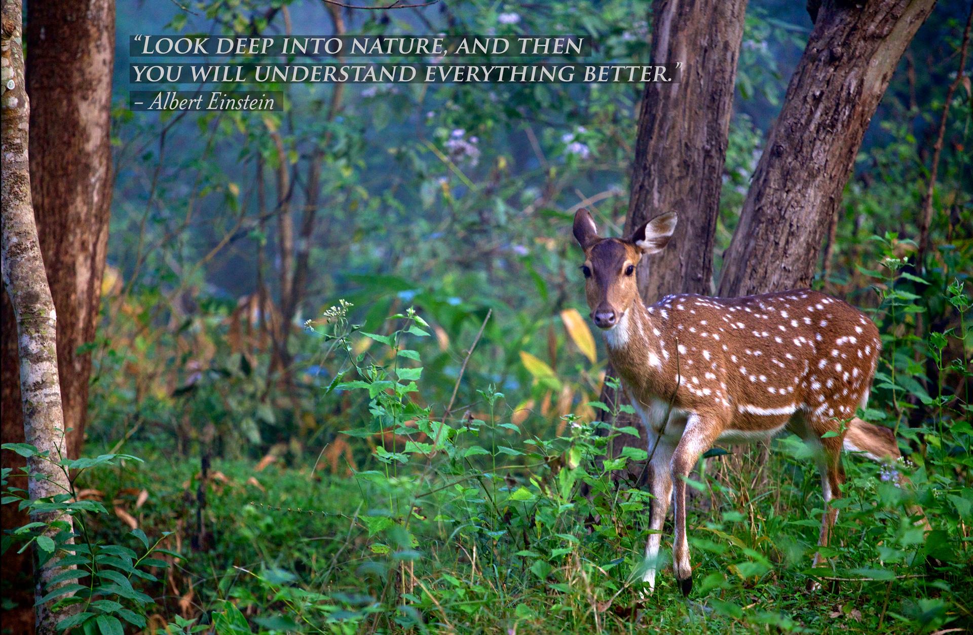 029_35---India-04.jpg