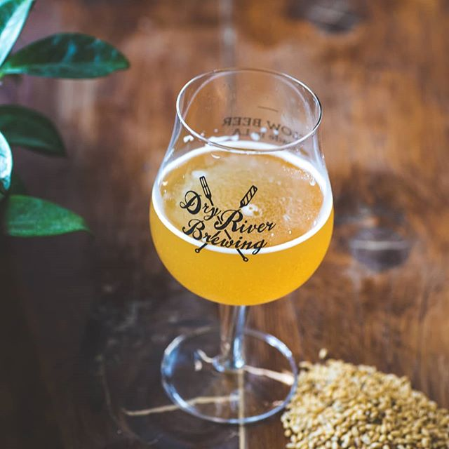 Our featured beer in the tasting room tonight and this weekend (while it lasts!) is Sonora 🍺 Our barrel-aged Saison brewed w/ house cultures and ancient grain 🌾 from @tehachapigrainproject . . . #dryriverbrewing #sustainablebrewing #slowbeer #dtlabeer #dtlabreweries #LAbeer #LAbrewers #ancientgrains #LAdrinks #thirstythursday