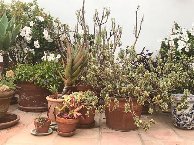 Favorite season, favorite botanicals.