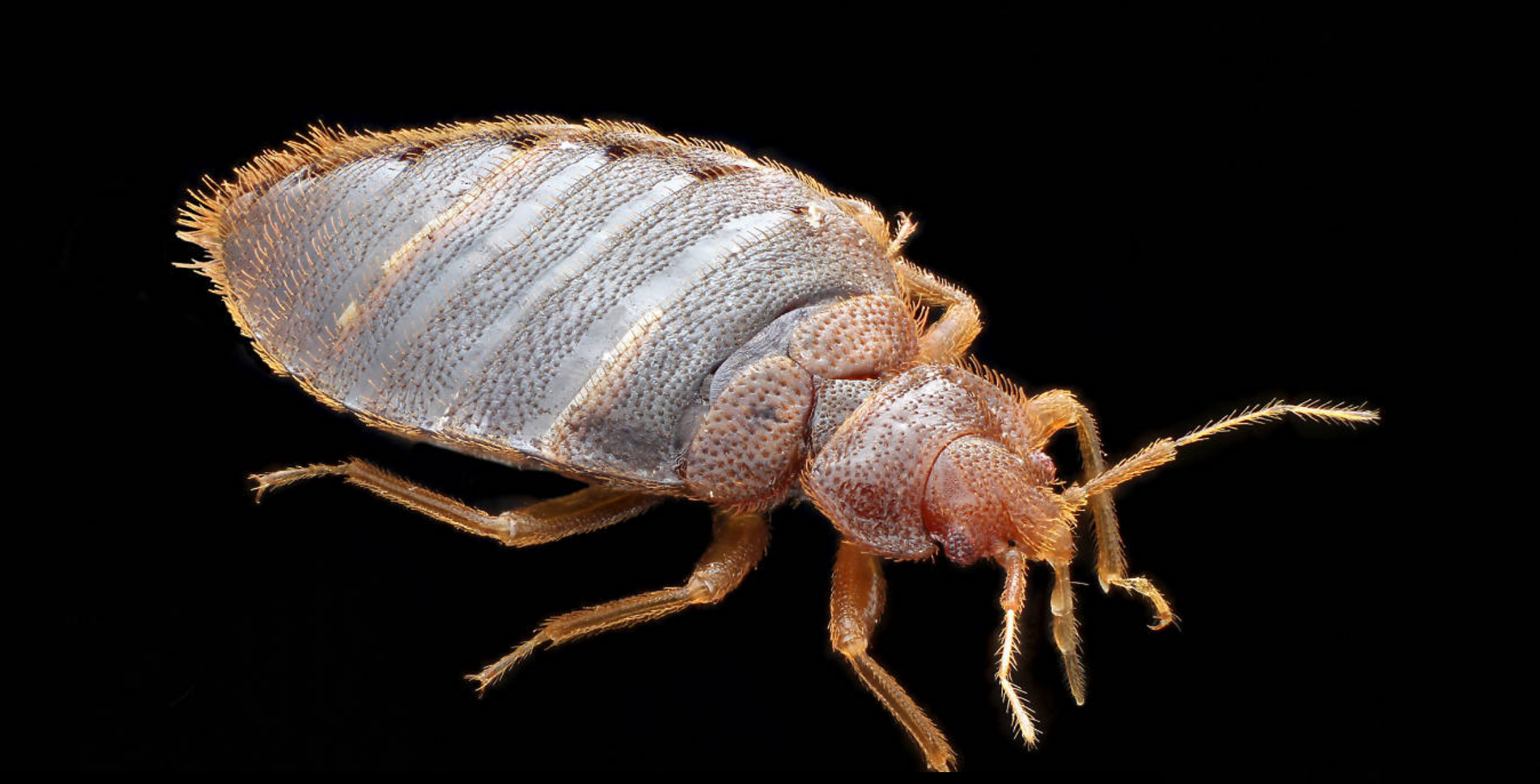Timeout blog bed bug
