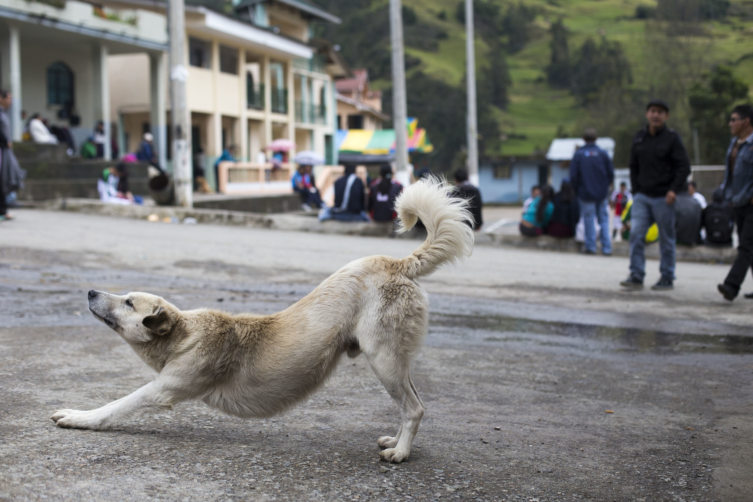 Stray dogs are everywhere in Ecuador.
