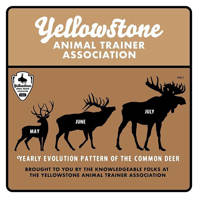 The super scientific folks at the Yellowstone Animal Trainer Association are droppin' some knowledge. #facts #yellowstonenationalpark #science
