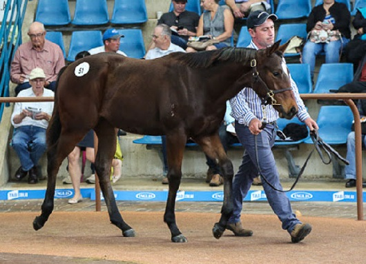 MORNINGTON MAGNUS Sale-topping filly targeted by Sheamus Mills