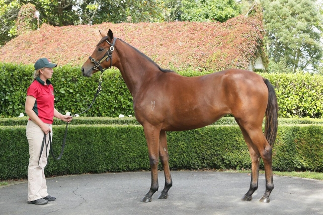 TAVISTOCK - BAGALOLLIES FILLY SOLD FOR $400,000