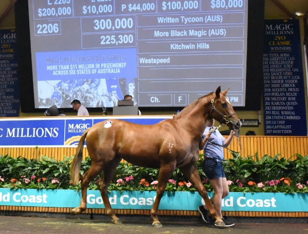 WRITTEN TYCOON - MORE BLACK MAGIC FILLY