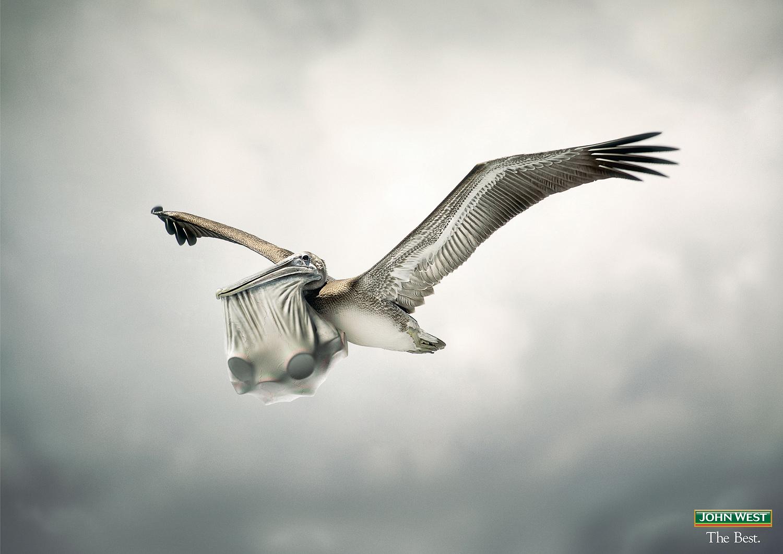 Agency-Pelican-with-artwork_WEB_ZP.jpg
