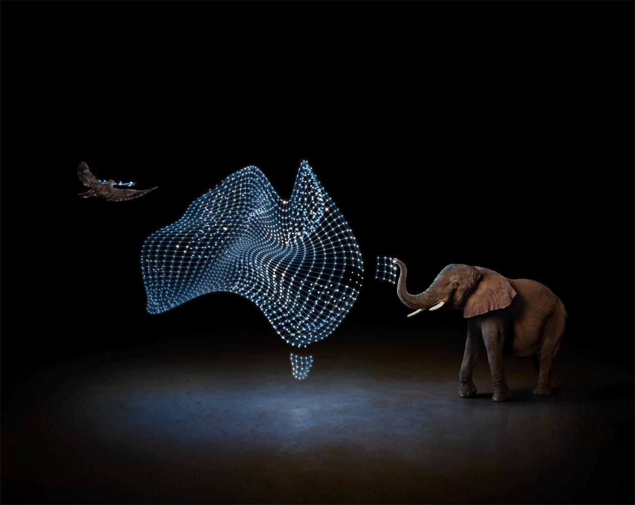 electric_art_optus-light-map-elephant_sdw.jpg