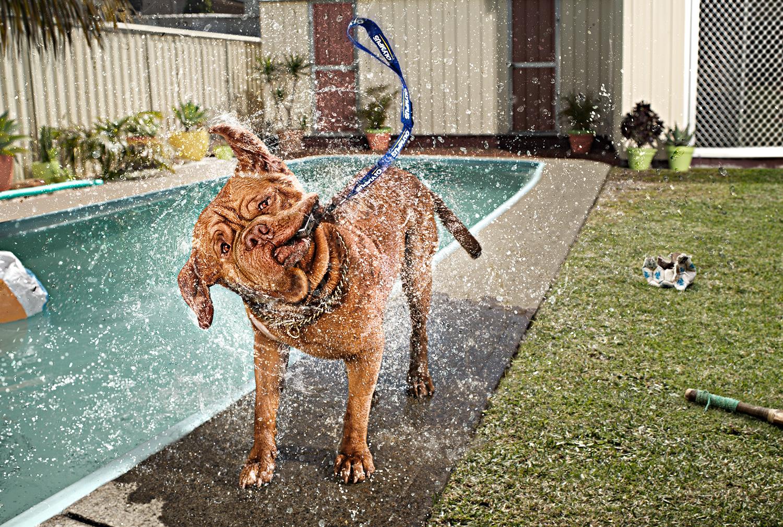 Dog_Pool-Water6-RGB-Final_WEB_ZP.jpg