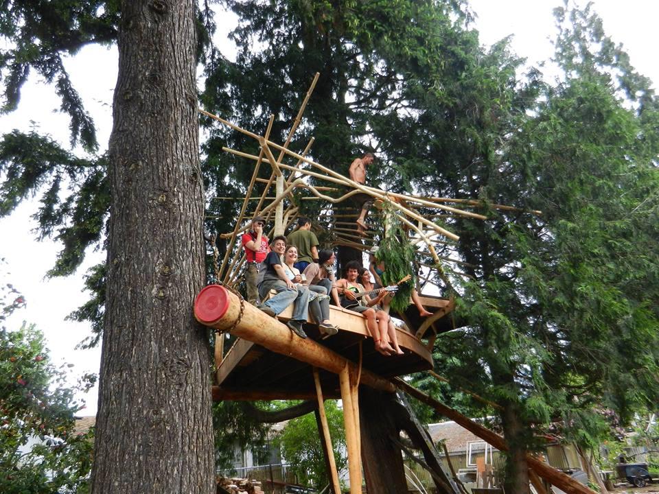 treehouse going up.jpg