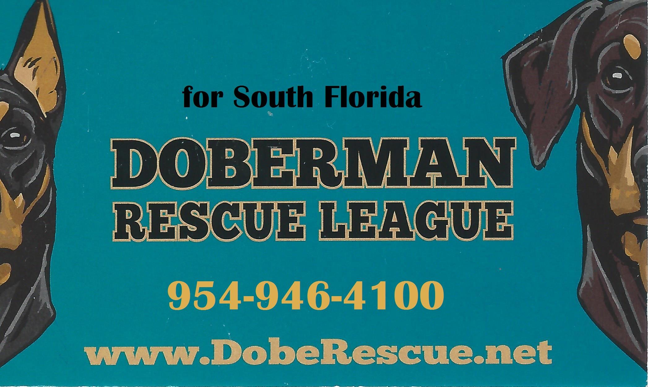 website Doberman Rescue South Florida.jpg
